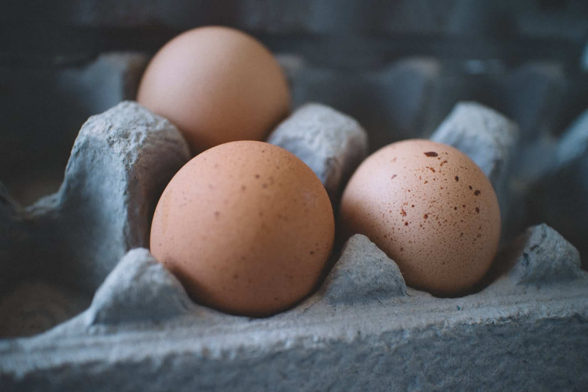 Protein: What Are Some Of Its Best Sources That Can Keep You Fit?